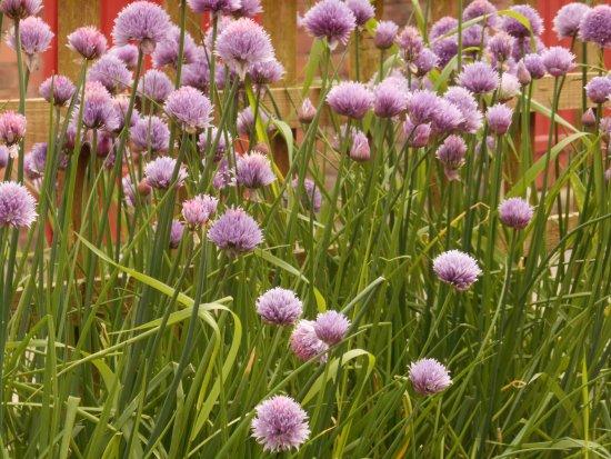 Cheshire, UK: Herb garden outside