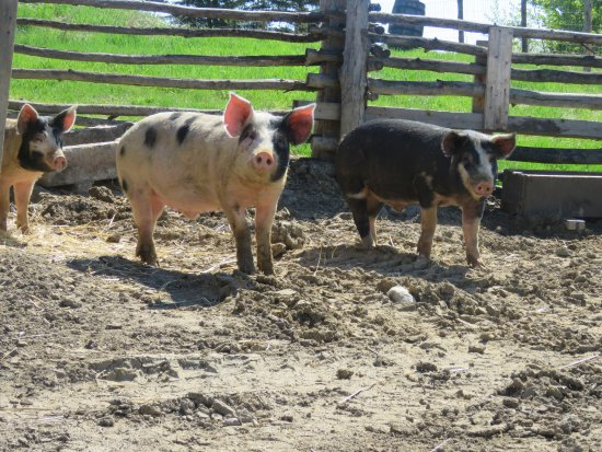 Sherwood Park, Canadá: Don't miss the 3 little pigs!