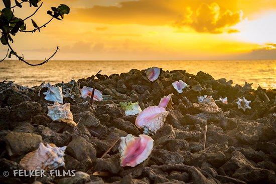 Placencia, Belice: Conch Sunrise on Island