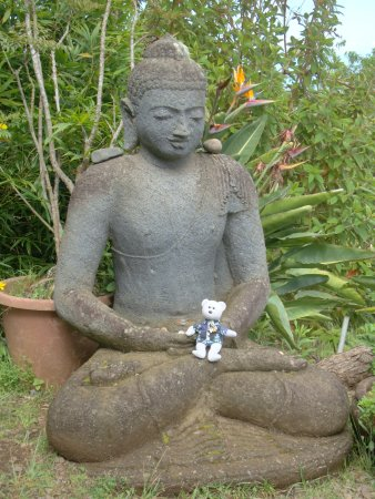 Kula, Havai: Behr finds solitude with his new friend!