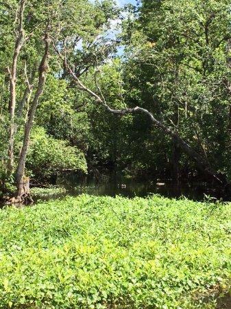 Ponce de Leon, FL: Boat tour