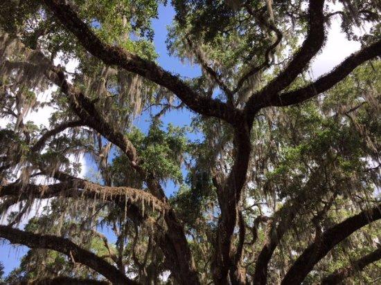 Ponce de Leon, FL: Plenty of shade