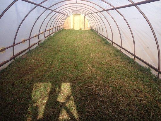 Боргарнес, Исландия: Hobbit camping houses    Camping in a green house