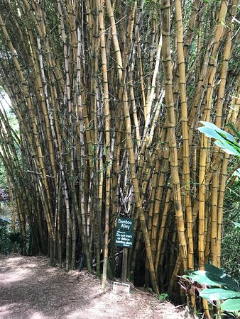 Garden of Eden Arboretum & Botanical Garden : photo4.jpg