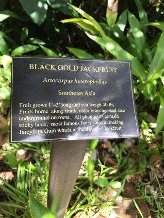 Garden of Eden Arboretum & Botanical Garden : photo5.jpg