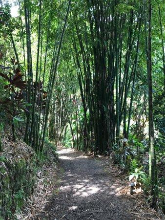 Garden of Eden Arboretum & Botanical Garden : photo6.jpg