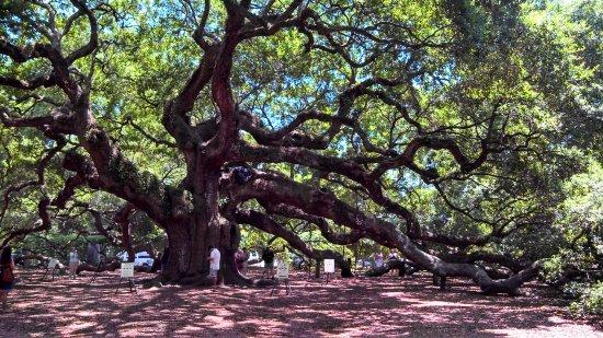 Johns Island, เซาท์แคโรไลนา: Angel Oak Tree