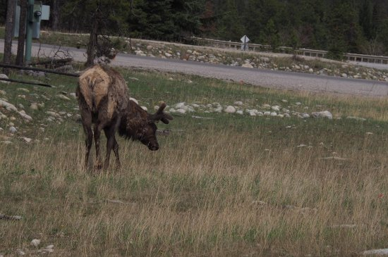 """Wapiti Campground: A few photo's of our stay at the campground """"wapiti"""""""