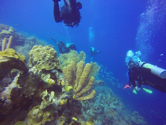 Kralendijk, Bonaire: Deep blue ocean while diving on a wall.