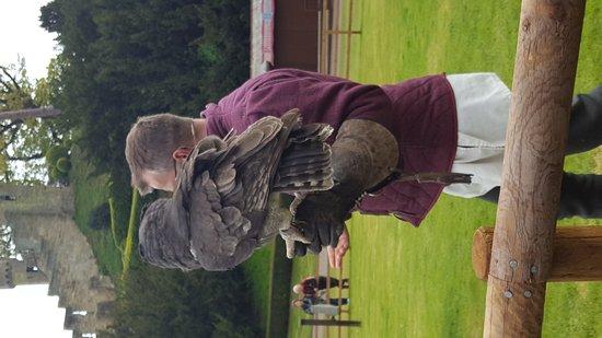 Warwick, UK: Bird of prey show.