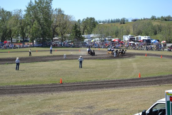 Cardston, Canada: Miniature Horse Chuckwagon races are held the third Friday and Saturday of August.