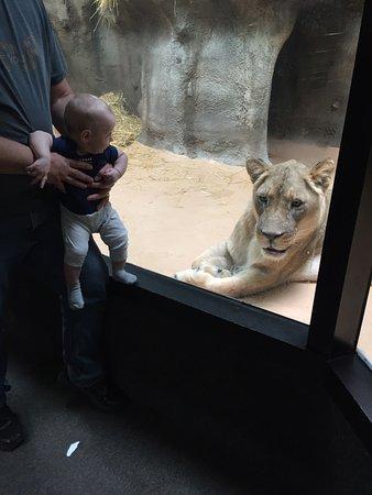 Potter Park Zoo: photo0.jpg