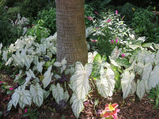 Beautiful plants located @ Botanical Garden in Statesboro