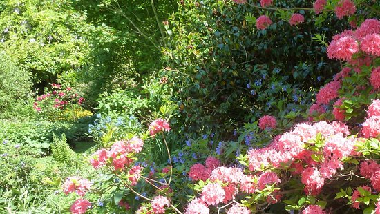 Ardleigh, UK: Green Island Garden, May 2017 - JPW photo 3