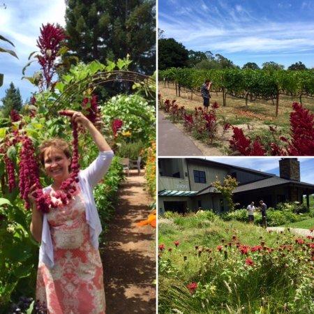 Lynmar Estate Winery : photo2.jpg