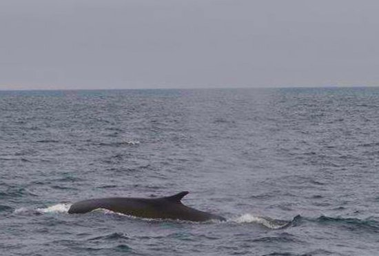 Hyannis Whale Watcher Cruises: Whale innit!