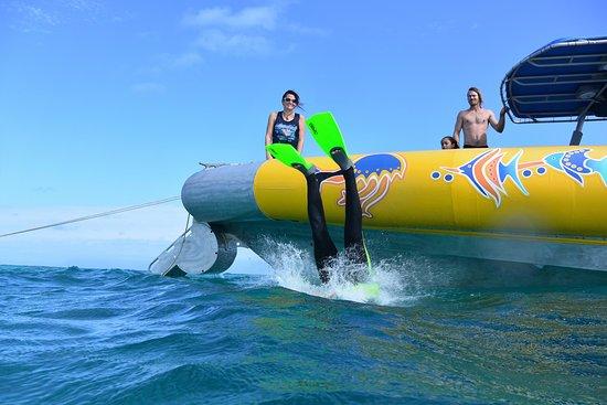 Cape Tribulation, Australia: Reef snorkeling + the boat