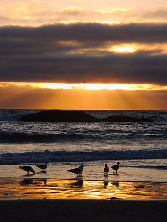 Gulls enjoy the sunset at Seal Rock State Park, Oregon