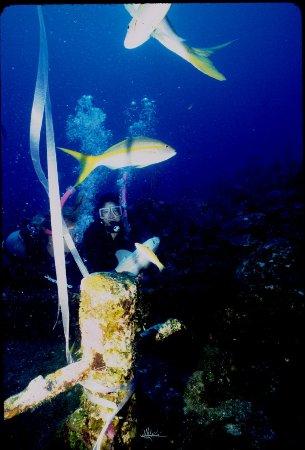 SunBreeze Hotel: Wreck Diving