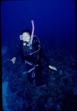 SunBreeze Hotel: Diving