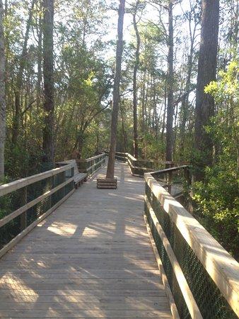 Niceville, FL: Trail on Turkey Creek