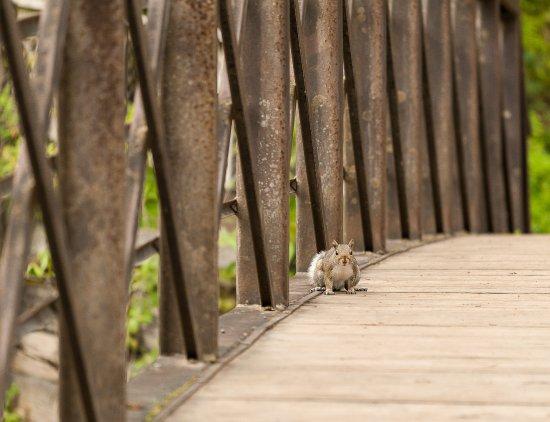 Cazenovia, Estado de Nueva York: Chittenango Squirrel