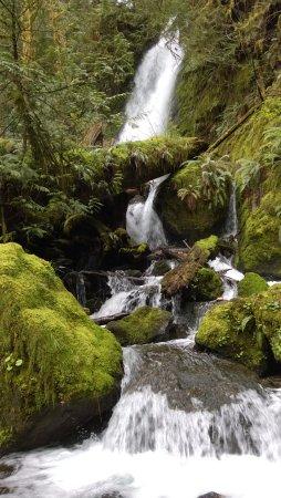 Quinault, WA: Merriman Falls