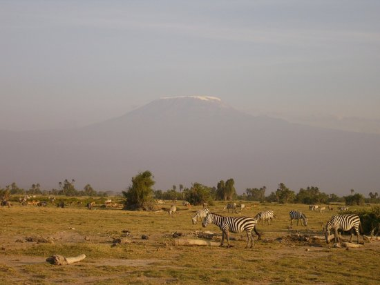 Amboseli National Park, Kenia: Picture of Mt. Kilimanjaro, during the migratory season(mid summer)