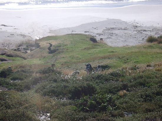 Stanley, Νήσοι Φώκλαντ: Gypsy Cove