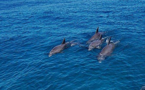 Placencia, Belize: porpoise
