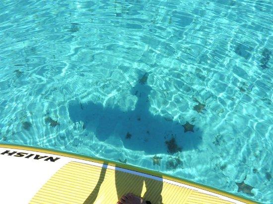 Cozumel Snorkel Tours From Playa Del Carmen