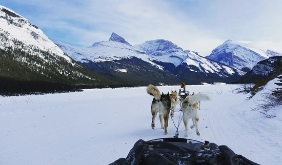 Snowy Owl Sled Dog Tours: A fabulous view with fabulous dogs