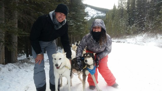 Snowy Owl Sled Dog Tours: Our pack leaders!
