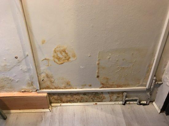 No.8 Hostel Willesden: muffa alle pareti