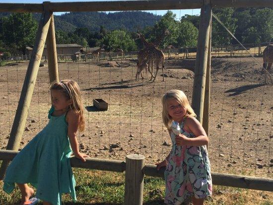 Safari West照片