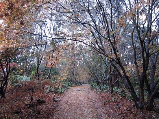 Bilpin, Australia: Lovely autumnal views