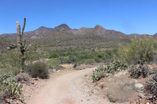 Cave Creek, AZ: Elephant Mountain