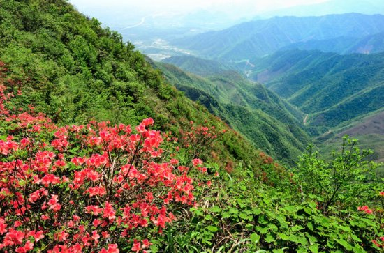 Private Tour: Yao Mountain and Tea...