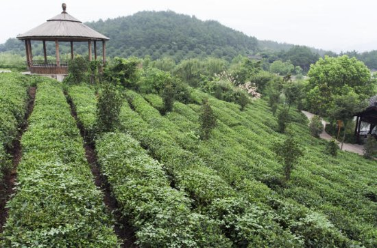 4-Day Hangzhou Private Tour: West...