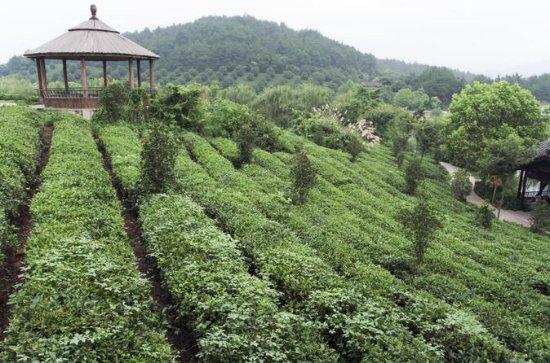 4-tägige private Tour in Hangzhou...