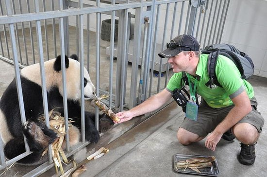 Panda Rescue Center Volunteer for a...