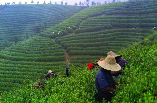 Experience Chengdu: Private Tea-Making...