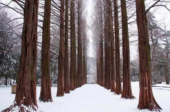 Winter Sonata TV Tour on Nami Island...
