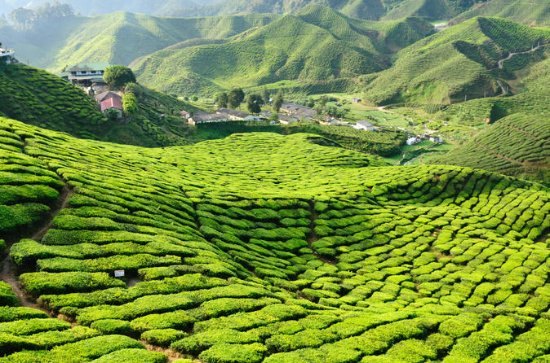 3-nat Cameron Highlands og Penang...