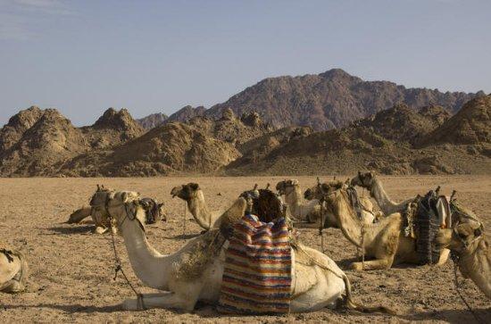 Sinaï Desert Camel Day Trek à Matamir...