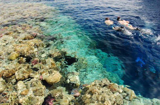 Egyptian Snorkel Day Trip from Sharm ...