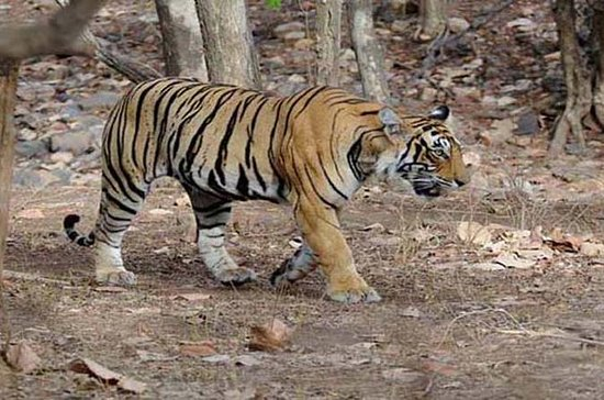 Panna National Park Day Trip from...