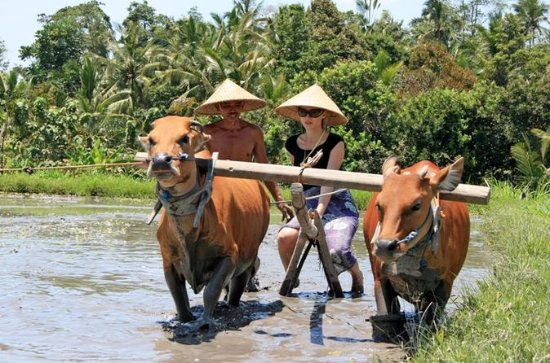 Balinese Daily Life Tour: Live Like A ...