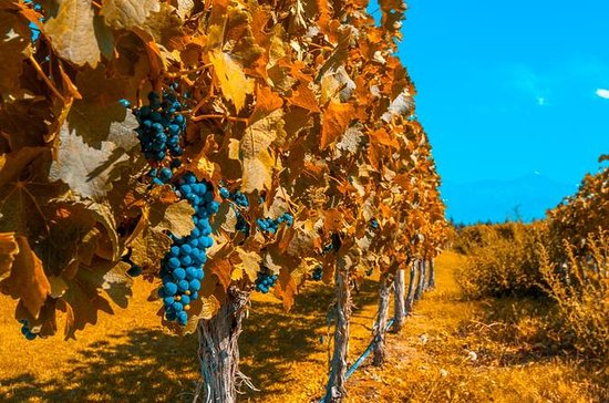 7-Day Best of Mendoza and Buenos...