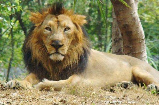 6-tägige Wildtier-Tour von Gujarat...